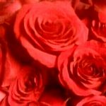 Little Falls Florist - Flower Delivery - ROSE PETALS FLORIST
