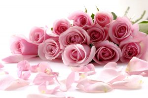 Valentine's Day is a Day for Roses