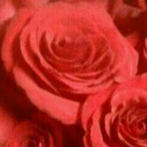 LITTLE FALLS NY FLORIST ROSE PETALS FLORIST