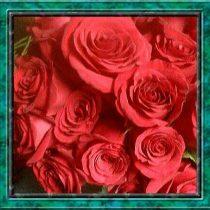 sexy red roses - little falls florists - ROSE PETALS FLORIST